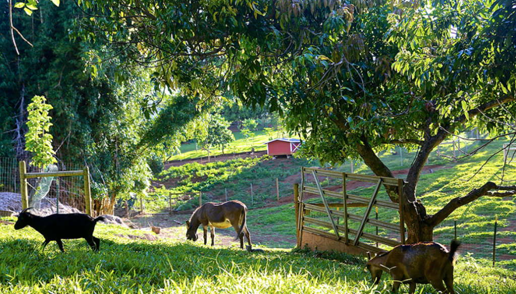 things to do in upcountry Maui